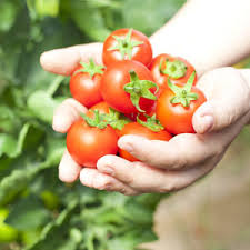 how to grow vegetables without a garden health24