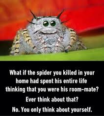 Image 325848 Misunderstood Spider Know - what if the spider you killed in your home had spent his entire life