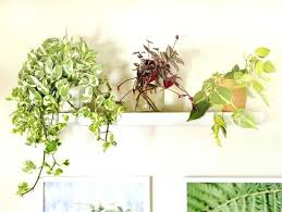 indor plants beautiful house plants thing about growing indoor plants is the low