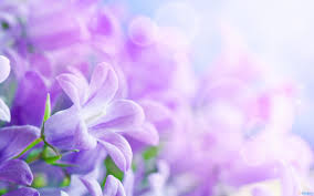 purple purple flower wallpapers purple flower wallpapers for pc hvga 3
