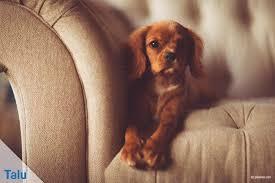 blutflecken entfernen sofa diy flecken auf und vom sofa stoff entfernen talu de