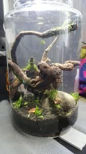 pico aquarium in a mason jar almost maintenance free 9 steps