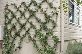 do it yourself make a wire wall trellis australian handyman for wire trellis