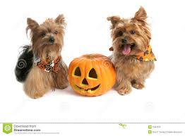 free to use halloween background halloween background stock photos images u0026 pictures 124 630 images