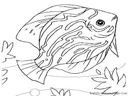 free coloring pages mn angler fish coloring