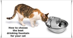 Cat Under Faucet How To Choose The Best Cat Water Fountain Pethelpful