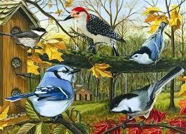 amazon jay bird black friday 13 best jigsaw puzzles birds images on pinterest jigsaw puzzles