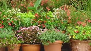 the best flowers for pots in phoenix az garden guides
