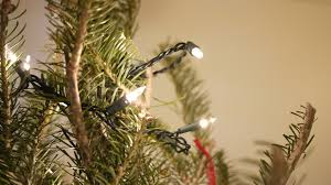 white lights up on a fir tree no cost royalty