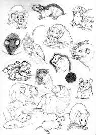 rat sketch practice 12 by never mor on deviantart