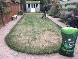 lawn care all about grass