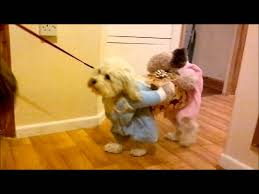 in costumes best 25 dog costumes ideas on