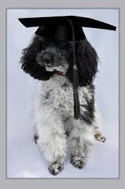 dog graduation cap dog with graduation cap stock image image of high degree 78386069