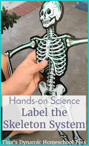 192 best homeschool anatomy images on pinterest science