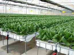 greenhouse for vegetable garden different ways to grow food all you need is water sun and