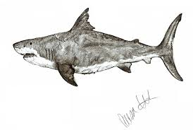 hd wallpapers megalodon shark coloring page hja earecom press