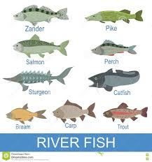 river fish identification slate with names stock vector image