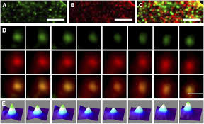 single molecule analysis of pip2 1 dynamics and partitioning