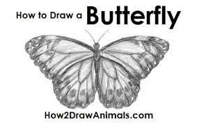 how to draw butterfly jpg