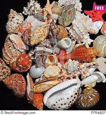 assorted seashells assorted colorful seashells free stock images photos 7794507