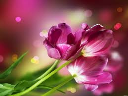 collection of beautiful flowers forestwonders