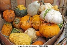 pumpkins with gourds categories fall nature objects image finder