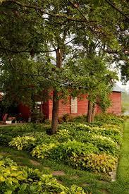 native plant sale muskoka conservancy 11 best garden checklist january images on pinterest garden
