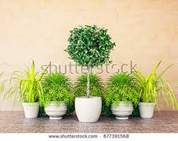 Topiary Plants Online - topiary stock images royalty free images u0026 vectors shutterstock