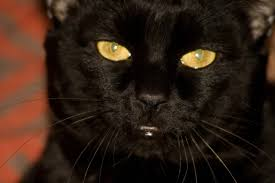 parasites in cats symptoms causes diagnosis treatment