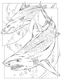free printable tiger sharks by richardkrumm on deviantart