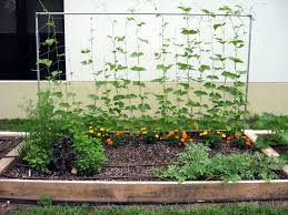 How To Plant A Garden In Your Backyard Pictures How To Make A Garden In Your Backyard Free Home
