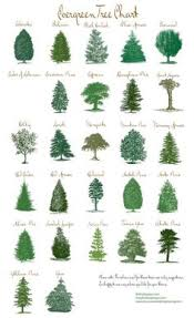 michigan tree identification by leaf identify trees by their