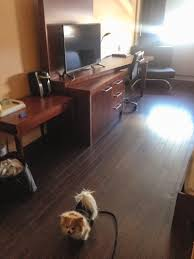 Laminate Flooring Montreal Staying At The Espresso Hotel With A Dog