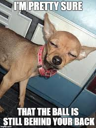 Funny Chihuahua Memes - 10 funny chihuahua memes what every dog deserves
