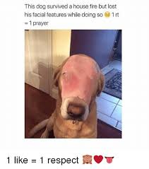 Lost Dog Meme - this dog survived a house fire but lost his facial features while