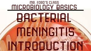 neisseria meningitidis sketchy microbiology bacteria viruses