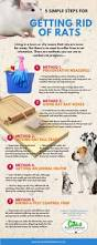 best 25 rat infestation ideas on pinterest rat rat rat and pet