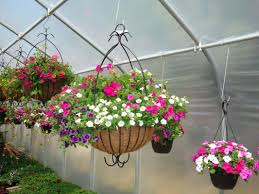 annuals and hanging baskets greenworld greenhouses