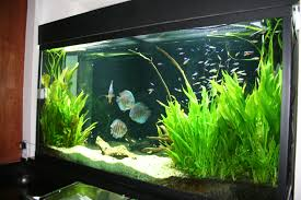 Aquascape Design Articles With Freshwater Aquarium Aquascape Design Ideas Tag
