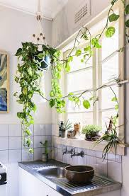 Design Sponge by Homelife Cascading Indoor Plants 4 Beautiful Vines To Drape