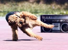 Dancing Dog Meme - break dancing dog blank template imgflip