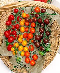 buy vegetable seed now cherry tomatoes u0027cherry u0027 mix bakker com