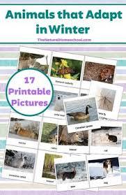 23 printable pictures of animals that hibernate printable