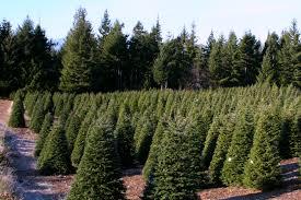 hubert u0027s christmas tree farm in kitsap county military town advisor