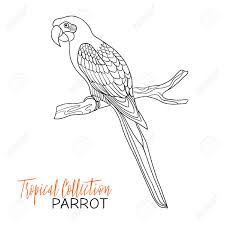 parrot tropical bird vector illustration coloring book for