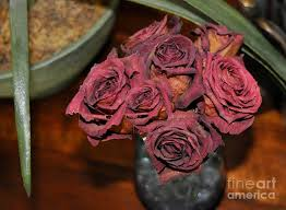 dried roses dried roses on table photograph by frank williams