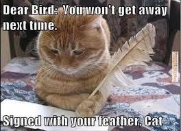 The Best Cat Memes - best ever cat memes lazy dwags