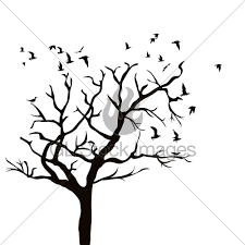 silhouette of a tree without leaves and birds flying gl stock images