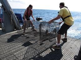 moray eels noaa teacher at sea blog