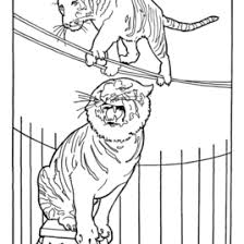 circus animal coloring pages printable performing circus trained